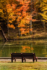 Bench in Early Fall 3-0 F LR 11-1-18 J046 (sunspotimages) Tags: bench benches nature fall autumn tree trees falltree falltrees autumntree autumntrees landscape forest foresttree foresttrees autumnforest