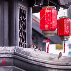 Bien à l'abri... (TchinChine !) Tags: chine jinshan pays shanghai 中国 上海 金山