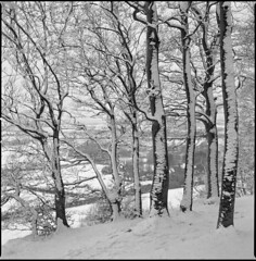 back at the start (steve-jack) Tags: hasselblad 501cm 80mm cb kodak trix 400 film 120 6x6 medium format perceptol snow woods forest uk trees epson v500