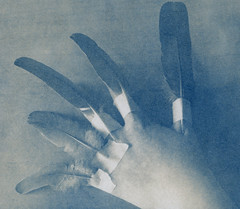 untitled (1969lucy) Tags: cyanotype altprocess analogue