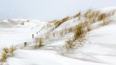 Snowy dunes (in explore) (He Ro.) Tags: darss schnee winter zingst dünen dunes snow storm snowstorm cold fischlanddarszingst prerow germany deutschland ostsee balticsea white landscape landschaft whiteout