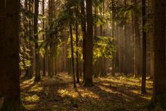 Forest lightplay (Sebo23) Tags: landscape landschaft licht lichtstimmung light forest wald nature naturaufnahme natur canon6d canon16354l