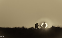 Face au soleil (MRI2009) Tags: nieuwpoort merdunord dunes coucherdesoleil noiretblanc contrejour silhouette