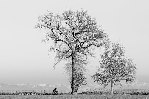 Two Trees, One Cyclist