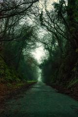 Foggy Passage (Ronny Darko) Tags: spooky spook foggy fog trees alley walk walkway cork ireland irlande baeume straeucher scary scare schrecklich schreck horror mysterious gloomy gloom green mist misty winter nebel