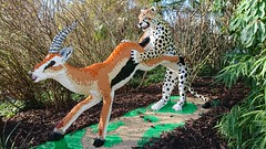Big Cats Lego Exhibition (Seventh Heaven Photography) Tags: big cats lego exhibition bricks plastic toys cheetah chester zoo cheshire england camera sony xperia xz1 phone deer