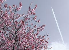 Spring (tvdijk19) Tags: spring01 spring flowers flower nature teunvandijk fujixt3 voorjaar bloesem blossom japan landscape