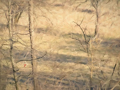 the Cardinal's aria (migueldeozarko) Tags: cardinal birdsong