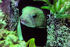 DSC_2514.jpg (IT_Ninja) Tags: photography urbex animals fish construction viewpoint aquarium