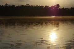 Liquid gold . . . (ericrstoner) Tags: rioerepecuru pará sunrise nascerdosol gold ouro bauxite bauxita amazon amazônia forest floresta water água river rio