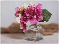 Still Life (N.the.Kudzu) Tags: tabletop stilllife lavoris mouthwash bottle flowers cheese cloth canondslr zenitar50mmf12 ringlight photoscape frame