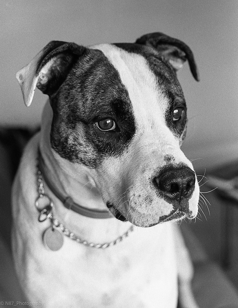 The World's Best Photos of catahoula and pet - Flickr Hive Mind