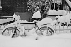 C'est l'hiver/Winter Wonderland (bob august) Tags: 2019 2019©rpd'aoust aperture3 bw bicyclette bike blackwhite canada d90 hiverwinter janvier montréal neige nikkor1735mm nikon nikond90 noiretblanc snow vélo villeray