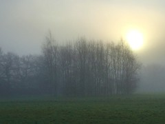 Morning Mist (Heaven`s Gate (John)) Tags: misty morning fog sun mist sunrise nature landscape trees johndalkin heavensgatejohn 10faves 25faves