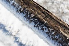 Großer Feldberg 1 190213_ (Bianchista) Tags: bianchista winter schnee snow hessen taunus feldberg 2019 februar mountain berg mittelgebirge