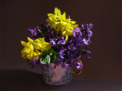 Violets and forsythia (Elena Chausova) Tags: forsythia фиалка фиалки флора природа цветок цветы весна растение растения натюрморт violet violets flora nature flower flowers spring plant plants stilllife yellow purple light