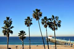 palms (greenelent) Tags: palmtrees ocean beach pier manhattanbeach ca california photoaday 365