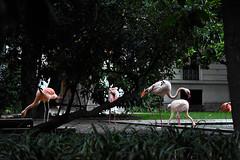Milano (miljanatomcic) Tags: milano milan italy italia travel photography newyearseve new year bird birds exotic flamingos