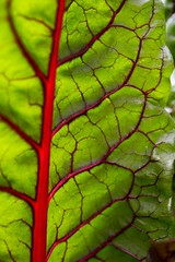 G03_Thiele and Vile_Swiss Chard G03_6899.jpg (st peters gardens armidale) Tags: beta community plants swisschard australia gardenweekend amaranthaceae nsw newengland 2017 events vegetablegarden places greenhouse church nature caryophyllales magnoliophyta vulgaris eudicot phanerogamae gwfavs garden leaves plant flowering macro flora angiospermae dicot plantae life gardenweekendflickr braundst armidale chard northerntablelands armidaleregion