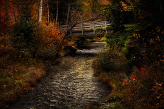 Series: Beauty Beyond the Barriers - # 1 (Carolyn Little) Tags: ie novascotia landscape textures bridge water stream autumn