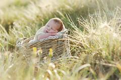 Amity Sage ({amanda}) Tags: newborn baby photography