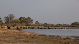 Namibia Dangerous Game Safari - Caprivi Strip 124