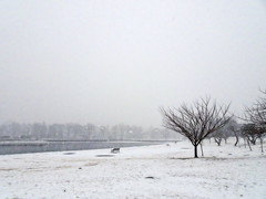 Lonely Bench (JMS2) Tags: winter harbor bench snowing nature weather cold trees park mamaroneck