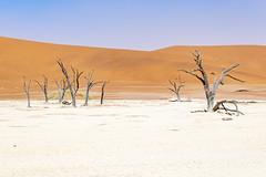 _RJS4681 (rjsnyc2) Tags: 2019 africa d850 desert dunes landscape namibia nikon outdoors photography remoteyear richardsilver richardsilverphoto safari sand sanddune travel travelphotographer animal camping nature tent trees wildlife