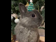 Cute Bunny Merry Christmas (tipiboogor1984) Tags: aww cute cat funny dog youtube