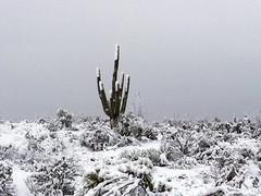 legend-trails-1902220725 (nagerfran) Tags: cactus winter desert storm snow cold freeze arizona scottsdale tontonationalforest