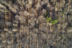 Abstract in Forest (S-A-Photography) Tags: abstract structure forest landscape outdoor art shadows lights