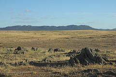 "La Serena, paysage ""dents de chien""   ""dog teeth""   ""dientes de perro"" ([ ͆ ◎] Bernard LIÉGEOIS) Tags: espagne españa spain estrémadure extremadura laserena paysage landscape"