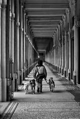 Temps de chiens (Mathieu HENON) Tags: leica leicam m240 noctilux 50mm laphotodulundi monochrome nb bw noirblanc blackwhite bnw france paris 1ier arrondissement street streetlife streetphoto photoderue palaisroyal jardin galerie couloir promenade chiens