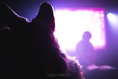 8M5A4443-37 (loboloc0) Tags: furries frolicparty frolic party furry club dance suit suiter fur fursuit dj sf san francisco indoor people costume performer animal blur portrait