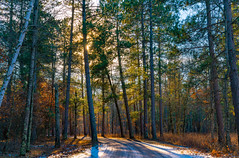 Winter Afternoon at St. Croix State Park, Minnesota (Tony Webster) Tags: december minnesota saintcroixstatepark stcroixstatepark afternoon autumn dirtroad fall forest road snow statepark sun sunshine trees winter crosbytownship unitedstates us
