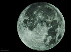 Today's Moon Full Moon  (Luna Llena) - 99.7%   15.3 days   357,349 km #moon #fullmoon #moonshot #photooftheday #beautiful #happy #moon_of_the_day #Nikon #P900 #NikonP900 (Agave Loco) Tags: nikonp900 moon beautiful nikon happy moonoftheday p900 moonshot photooftheday fullmoon