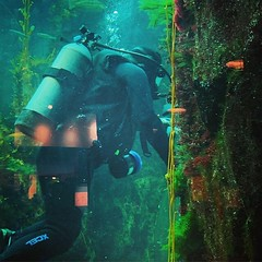 Diver at the California Science Center Visiting with Italian family. #aquarium #science #oceanography #kids #children #ocean #sea (dewelch) Tags: ifttt instagram diver california science center visiting with italian family aquarium oceanography kids children ocean sea