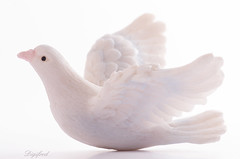 White on white (Digifred.nl) Tags: macromondays whiteonwhite digifred 2019 nederland netherlands pentaxk5 hmm macro macrophotography closeup duif dove bird