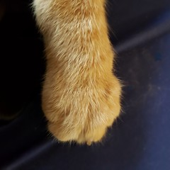 Red handed (MoparMadman63) Tags: minimalism minimum fur soft orange cat domestic paw