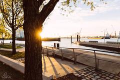 Sunrise at Hamburg harbor (Alexandre Marah) Tags: 2470l 5d allemagne arbre aube canon city cityscape germany hambourg hamburg llense sunrise tree water eau harbor markiv morning pier port quai sun urbain ville waterfront