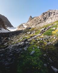 Alpine Meadows (StevenScarcello) Tags: peaks rocks earth summer nature wilderness alpine washington mountains sunrise vibrant yellow moss green scenery wildflowers flowers spring landsacpe