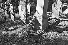 General Cemetery  Monochrome (brianarchie65) Tags: generalcemetery cemeteries hull grass trees bushes graves grave brianarchie65 geotagged kingstonuponhull springbankwest headstones brokenheadstones wheels shadows ngc