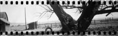 Abandoned homestead (No Stone Unturned Photography) Tags: moody blackandwhite monochrome kodak folding expired ilford delta 100 35mm film sprocket holes jiffy camera art deco 1933 six16 616 panoramic tireswing barn farm tree