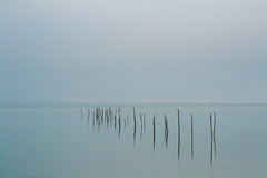 sticks with seagull (phacelias) Tags: castiglionedellago marleenroelofs trasimenomeer blauw lucht meer stokken water trasimenolake umbria blue sky lake sticks blu cielo lago lagoditrasimeno bastoni