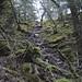Scramble trail up at Lower Reid Falls
