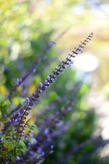 #morning #picoftheday #photooftheday #colors #landscape #nofilter #photo #ontheroad #minimalism #skyline #sunset #flowers ##morning #picoftheday #photooftheday #colors #landscape #nofilter #photo #skyline #sunrise #ontheroad #minimalism #sea#liguria #suns (cuocopopo_mc) Tags: photooftheday flowers sunrise nofilter sunshine instaflower villahanbury photo skyline colors sea morning ontheroad liguria picoftheday minimalism italia sunset natureshooters landscape