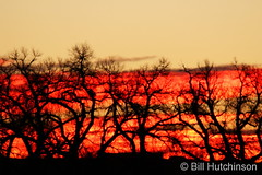 January 7, 2019 - Brilliant sunrise in Adams County. (Bill Hutchinson)