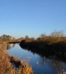 Blue and gold (simon edge) Tags: nikon d5100 40mm nikkor chesterfieldcanal stitched msice moon water reflections sly ducks