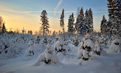 Winter wonderland. Sunny day... but it's -21C. Nice and warm :-))) Who wants to walk with me? ;-)) Winter 2019, Finland. (L.Lahtinen (nature photography)) Tags: winter finland snowy landscape landscapephotography winterwonderland nature naturephotography nikond3200 suomi maisema luontokuvaus luonto talvi sky lunta lumi luonnonmaisema weather snowcoveredtrees