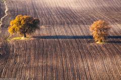 Gemelli Diversi (SDB79) Tags: molise ururi campagna alberi terra coltivazioni aratura paesaggio